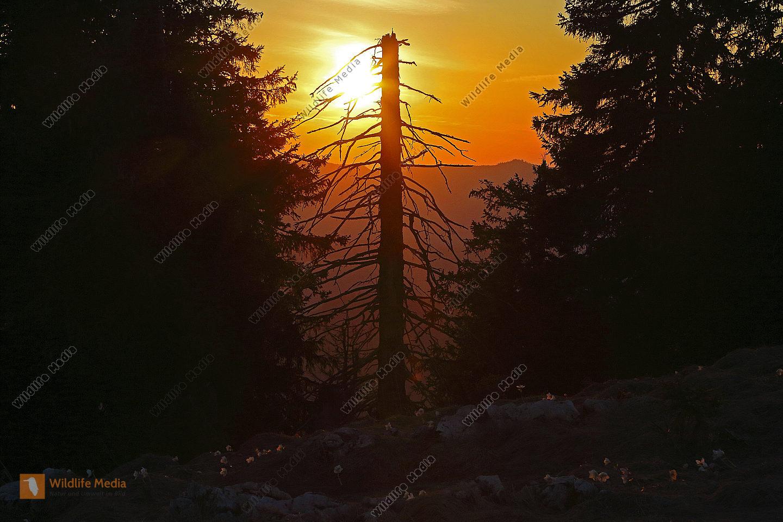Sonnenuntergang am Dürrenstein